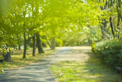 背景 ぼかし 公園
