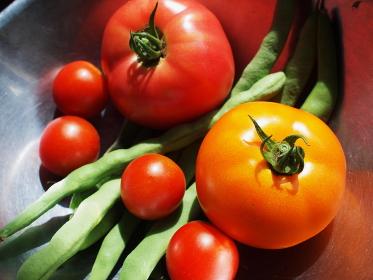 家庭菜園のトマトとインゲン
