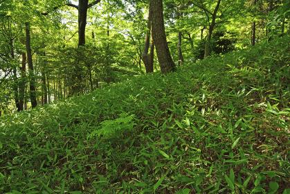 殿ケ谷戸庭園・傾斜面崖線
