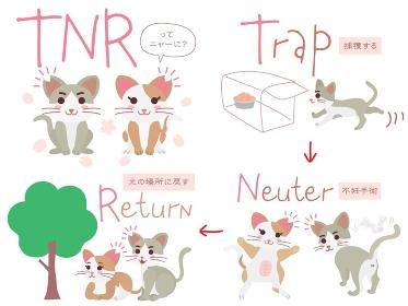 地域猫TNRのイラストのセット