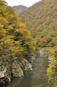 赤芝峡の紅葉