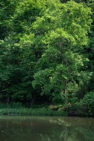 初夏の森と池 狭山公園の宅部池 6月