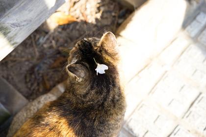 桜の花びらを頭にのせた猫