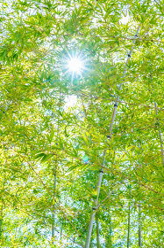 朝の陽射しと竹林