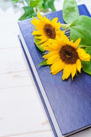 夏イメージ ひまわりの花