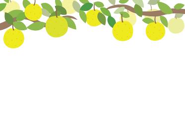 梨のフレームイラスト 上