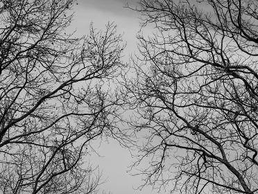 枯れ枝と曇り空 1608
