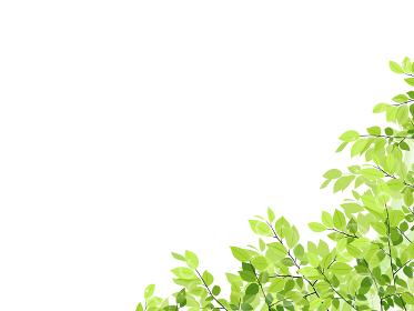 新緑のフレーム・背景素材(横長)