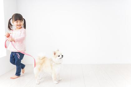 犬の散歩をする子ども