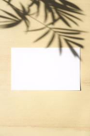 テーブルヤシの影と白いカード 5 縦位置