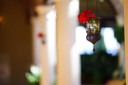 花のランプ