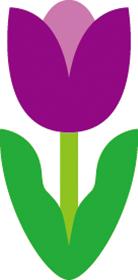 チューリップ 紫 むらさき