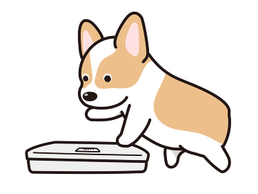 体重を測ろうとする犬 コーギー