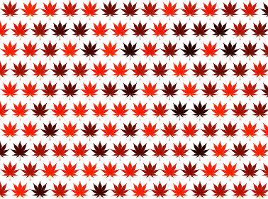 連続した紅葉のパターン 背景画像 白赤
