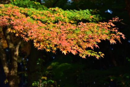 神社境内、秋
