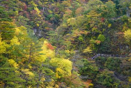 遊歩道に観光客がいる鳴子峡渓谷の風景、宮城県大崎市鳴子峡