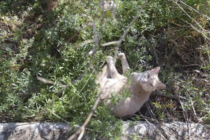 草むらで横になってる猫