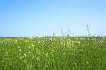 草原と青空に光芒 CG