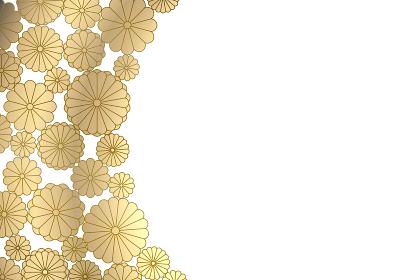 金色の菊のフレームイラスト 1