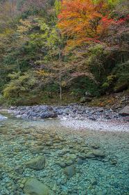 長野県大桑村 阿寺渓谷の紅葉