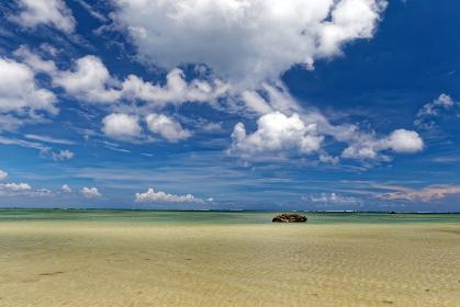 白保海岸 石垣島 珊瑚養殖保護