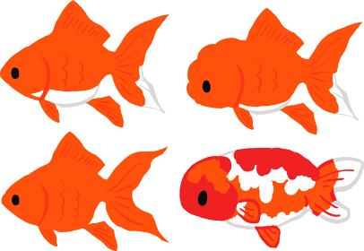 金魚のセットイラスト