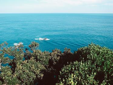 崖の上の森林から見える海と空