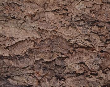 コルクの表面