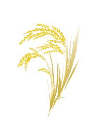 金色の稲穂 筆絵 イラスト