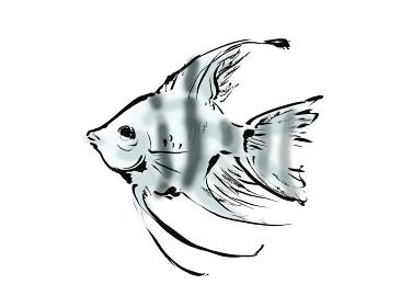 手描きイラスト素材 エンゼルフィッシュ 熱帯魚 シマシマ