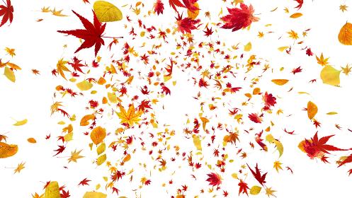紅葉 落葉 秋 オータム 舞う 葉 エコロジー 緑 CG 3D イラスト 背景 バックグラウンド