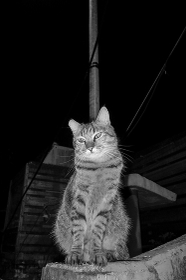 台湾の野良猫
