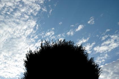 樹木のシルエット・青空