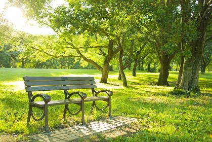 公園 ベンチ