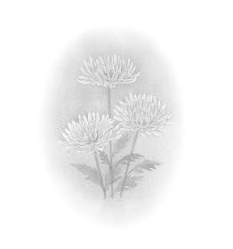 菊の花 モノクロ