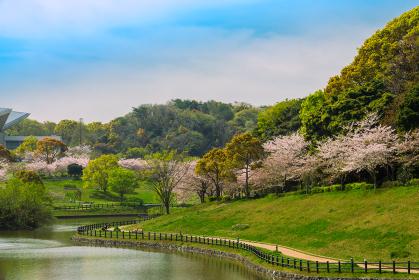 北九州のオアシス 春の福岡県営中央公園