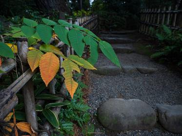 紅葉し始めた木々と日本庭園