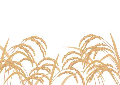 稲のイラスト