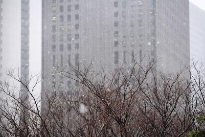 西新宿の雪景色