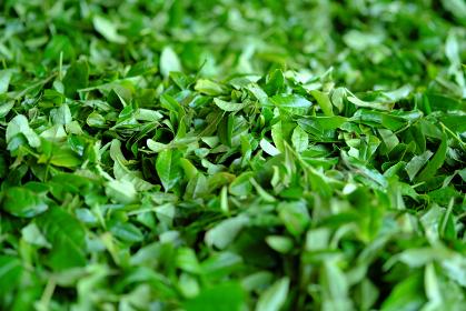 綺麗な茶葉のイメージ素材