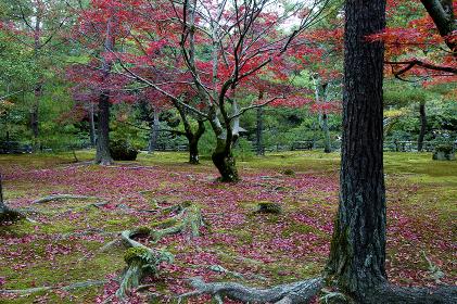 紅葉したもみじが美しい庭