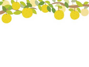 梨のフレーム 上