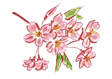 手描きイラスト素材 植物 桜の花 桜 桜の枝 さくら サクラ
