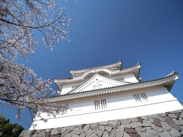 青空と桜 大多喜城