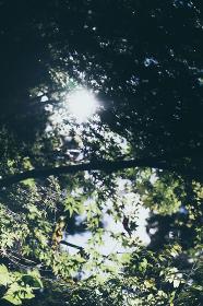 樹木と葉っぱから漏れる光