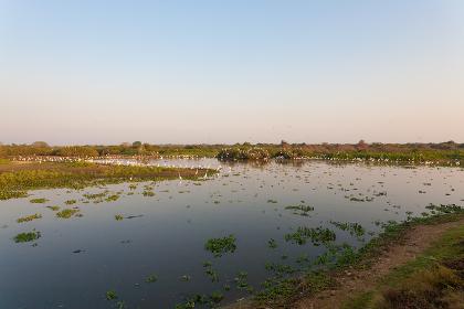 Beautiful Pantanal landscape, South America, Brazil