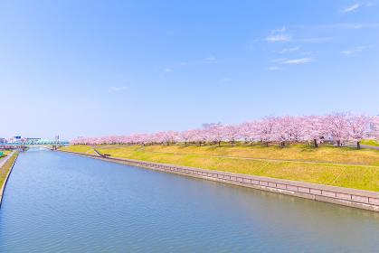 橋の上から望む赤羽桜堤緑地