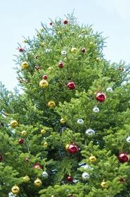 昼間のクリスマスツリー