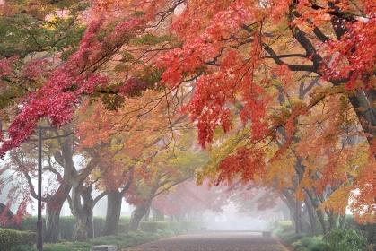 大山参道の紅葉、那須、栃木県