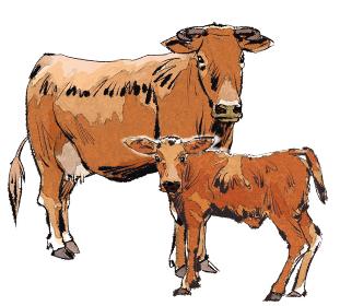 丑 牛 うし ウシ 子牛 茶色種  親子 干支 十二支